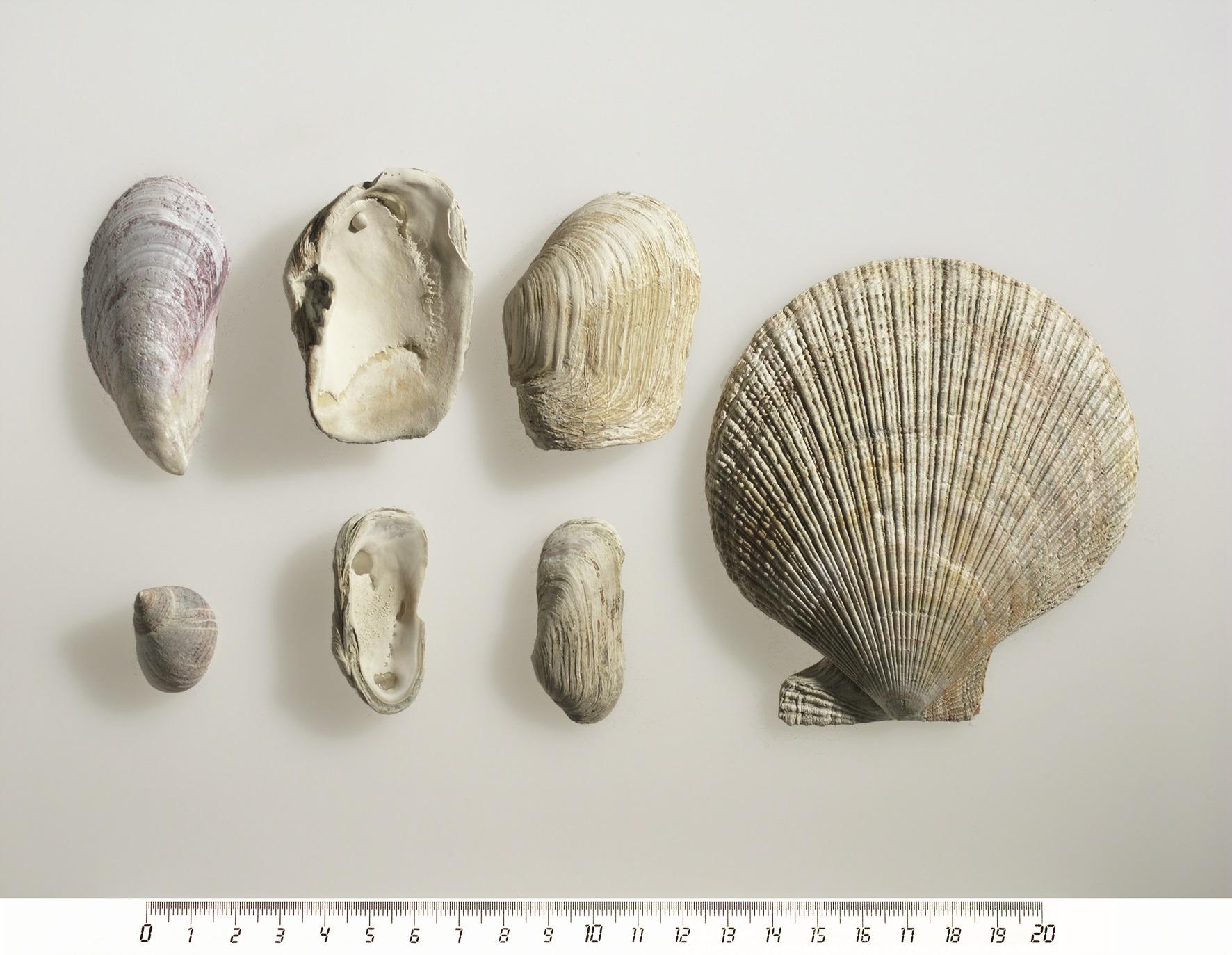 dating fossile skjell