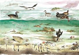 Vanlege botndyr, fisk og fugl på Herdleflaket.