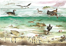 Common bottom animals, fish and birds on Herdleflaket.