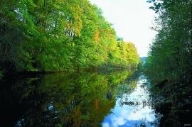 Plantet bøkeskog mellom Nesttunvatnet og Hopsvatnet.