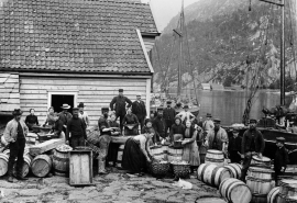 The salting of herring in Engevikhavn in 1894