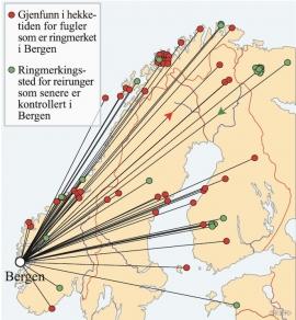 Kart som viser hvor fiskemåsene som overvintrer i Bergen, har sin opprinnelse. (Alf Tore Mjøs/ Eva Bjørseth)