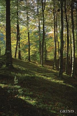 Bøkeskogen (beech forest) in skånevik
