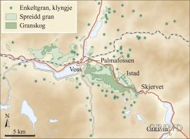 Førekomstar av naturleg gran i Voss