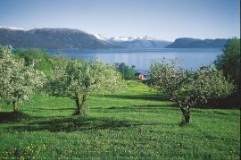 Som ein barm mot fjorden ligg Strandebarm