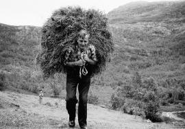 Haymaking at Ljosavatnet