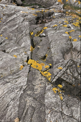 Basaltic veins that have intruded into the gabbro.