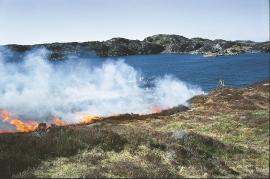Burning off of the heather on Lygra with botanist Mons Kvamme as fire chief. Lurekalven in the background.