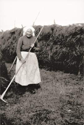 Anna Olsdatter Husebø (1849–1932) making hay at Husebø, roughly 1930.