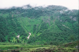 Avalanche path by Røldal