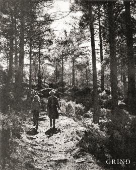 Tette skogområda nord på Tysnes