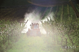 Tåkesprøyting av epletre
