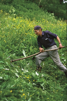 Arne Dugstad cuts the fertile meadow with a scythe.