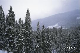 Granskog på Voss