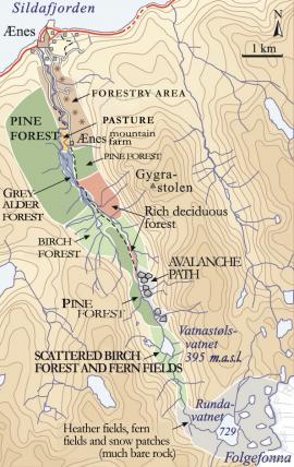 Map of vegetation in Ænesdalen.