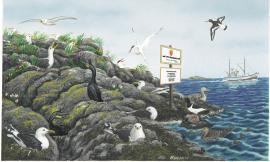 The seabirds nest preferably on islands or on bird precipices. (Watercolor: Bogdan Bocianowski)