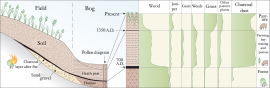 A cross-section (left) and pollen diagram (right) that shows how the peat layers give information about the changes in vegetation at Lurekalven.