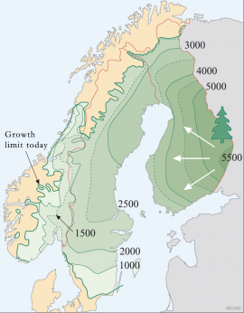 The spreading of the spruce forest from east to west in Scandinavia