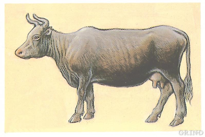 Cattle and sheep and goats have shaped the landscape from the younger Stone Age until today
