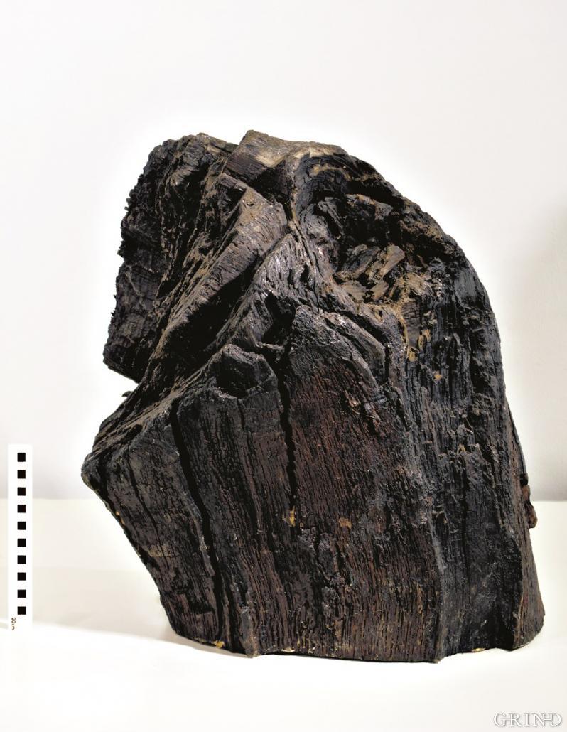 Nær 6000 år gammel eikestubbe
