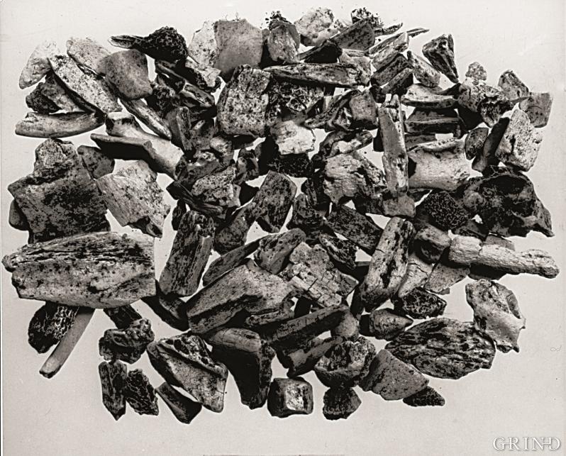 En samling utgravde fiskebein fra gravfunnet ved Fosnstraumen i Radøy