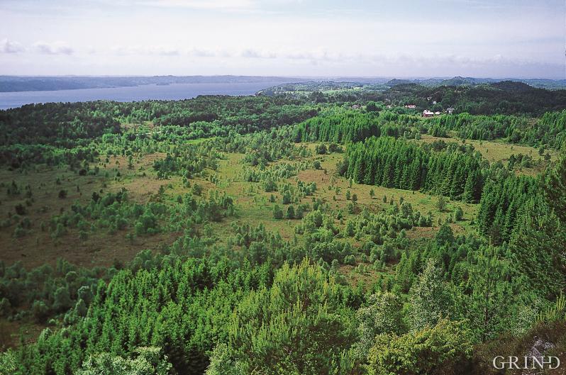 Hjartås, Meland
