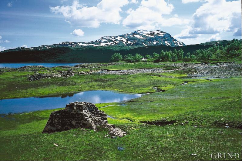 Hamlagrø